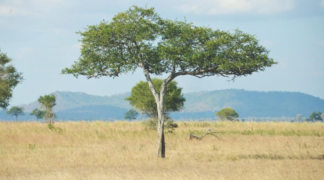 東アフリカのタンザニアに広がる大自然サバンナ